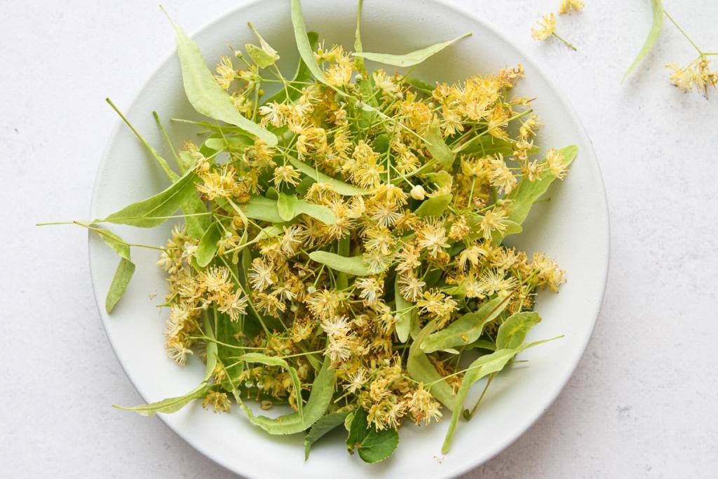 Linden flowers for making linden flower syrup